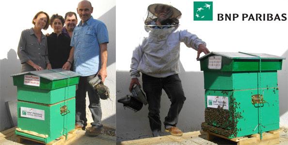 Installation de ruches chez BNP PARIBAS Marseille