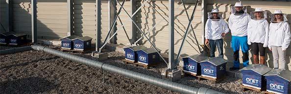 Rûches sur les toits de l'entreprise ONET